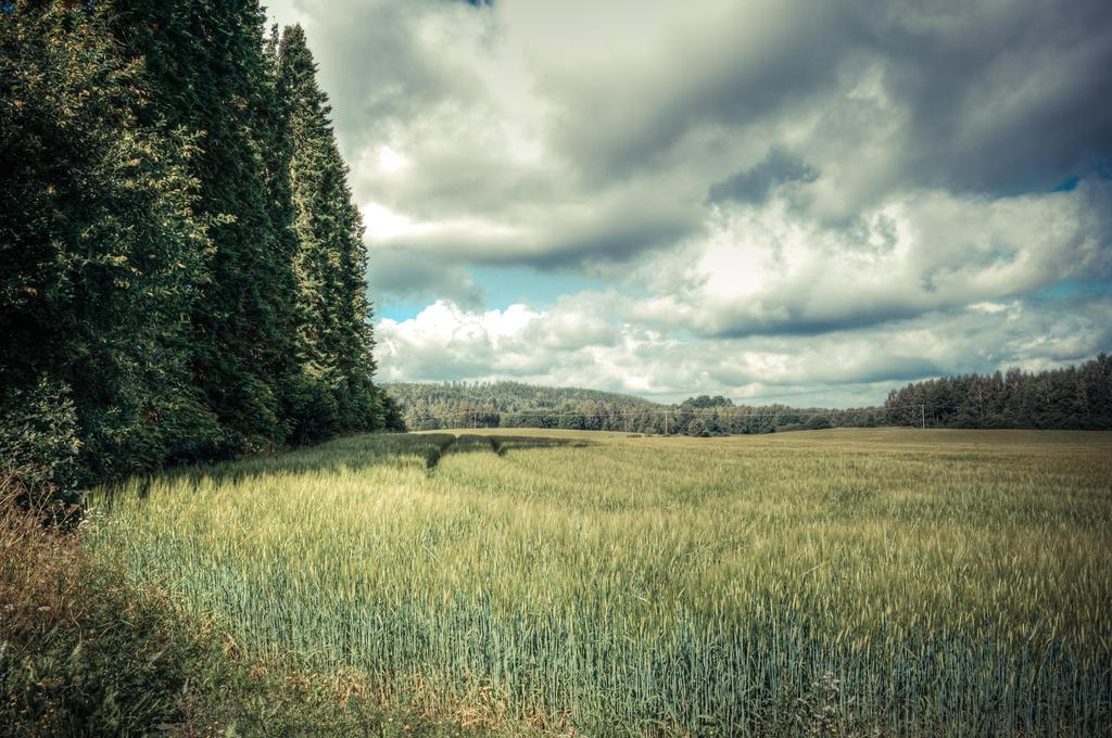 Retro field by valkeeja