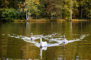 Swan formation by valkeeja
