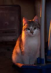 Cinderella-cat by LadyLuxuria