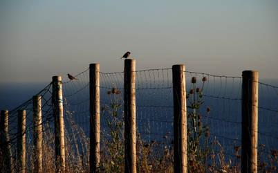 Birds on the beach by JudLorin