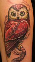 owl by kurtfagerland