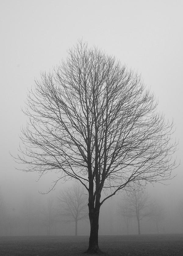 Tree on a Foggy Morning by tleach0608