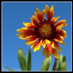 Arizona Sun by tleach0608