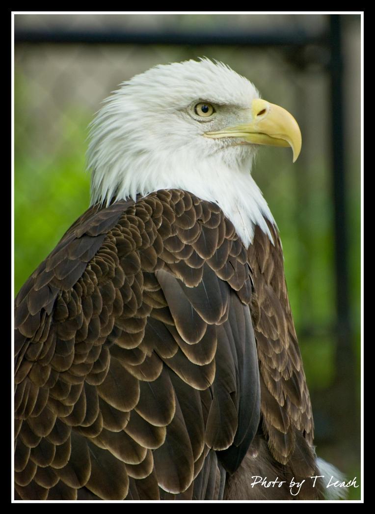 Freedom by tleach0608