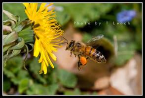 Busy As a Bee by tleach0608