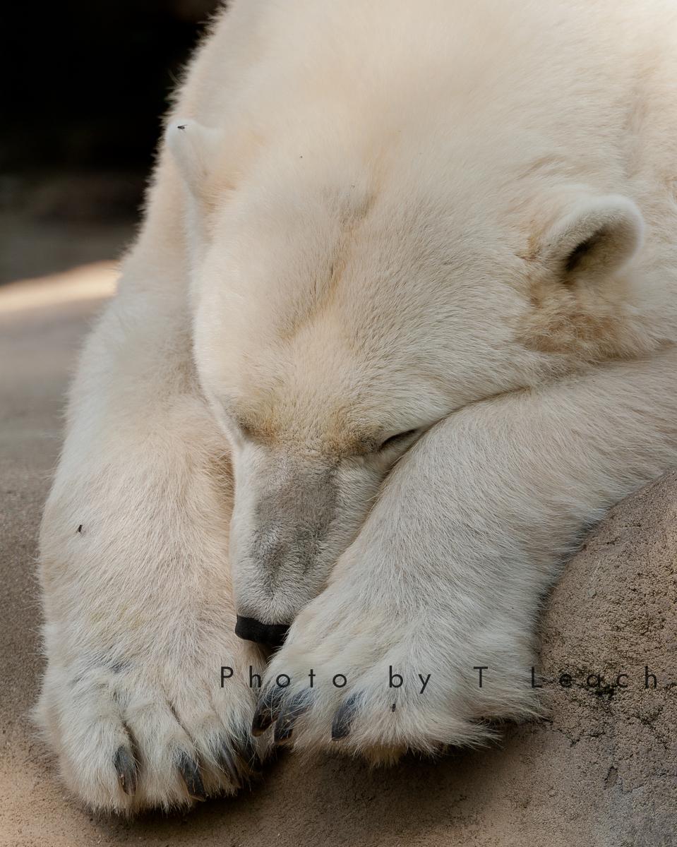 Bear Paws by tleach0608