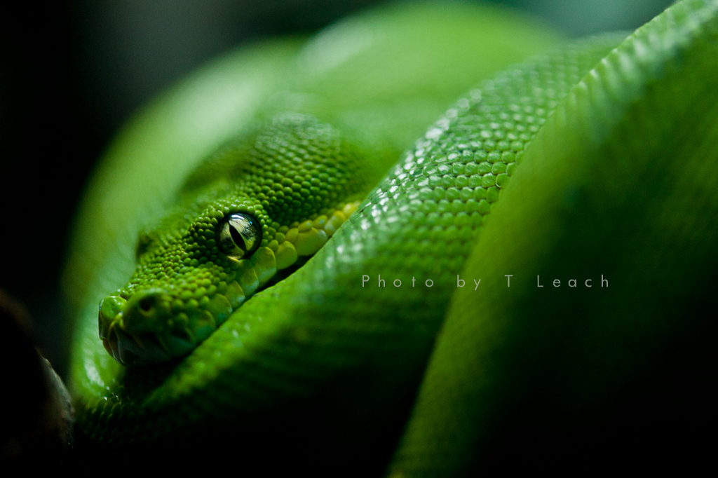 Slither by tleach0608