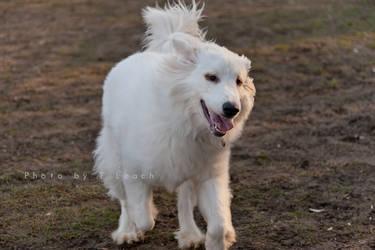 Puppy Joy by tleach0608