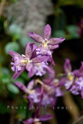 Violaceous by tleach0608