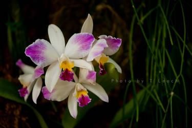 Primal Beauty by tleach0608