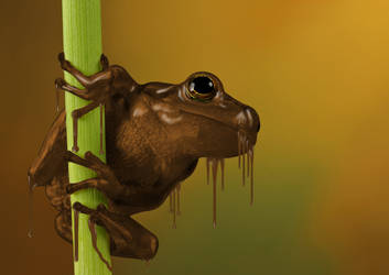 Chocolate frog by sayatoto