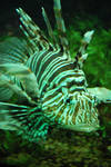 Fish 15 by Dark-Ashelin