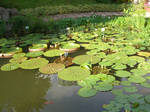 lily pads 1.5