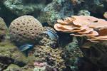 coral reef 1.3