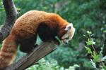 red panda 1.19