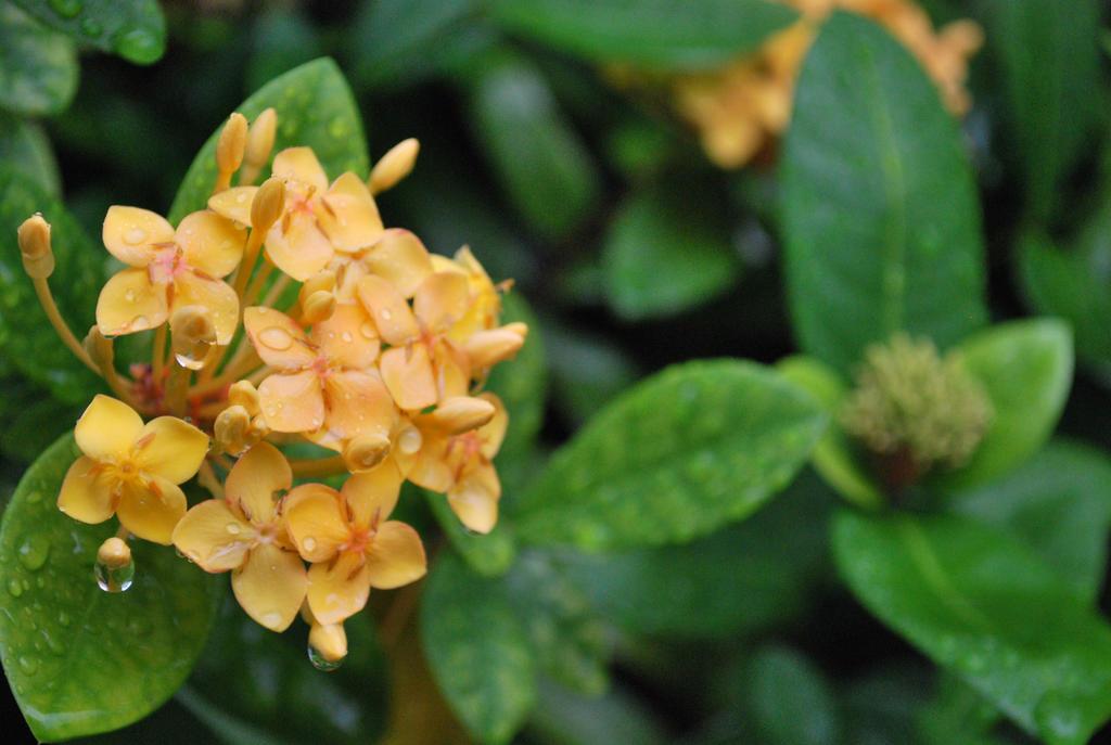 wet flowers 1.2 by meihua-stock