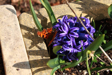 Like A Butterfly by phoenixwyllow