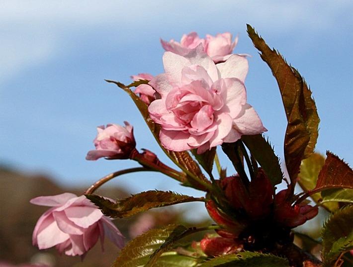Dazzling Flowers by SouHkman