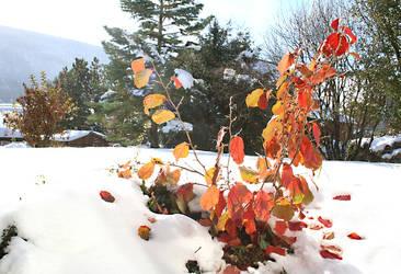 Mixed Season by SouHkman