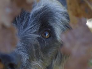 Lakyscha's Profile Picture