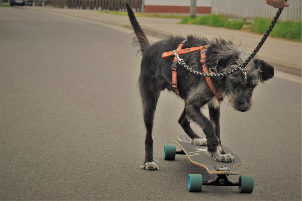 Dog Rescue Groups In Dayton Ohio