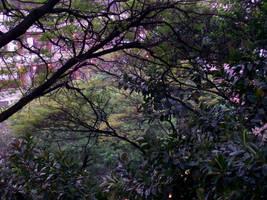 Arbor by renan-gme