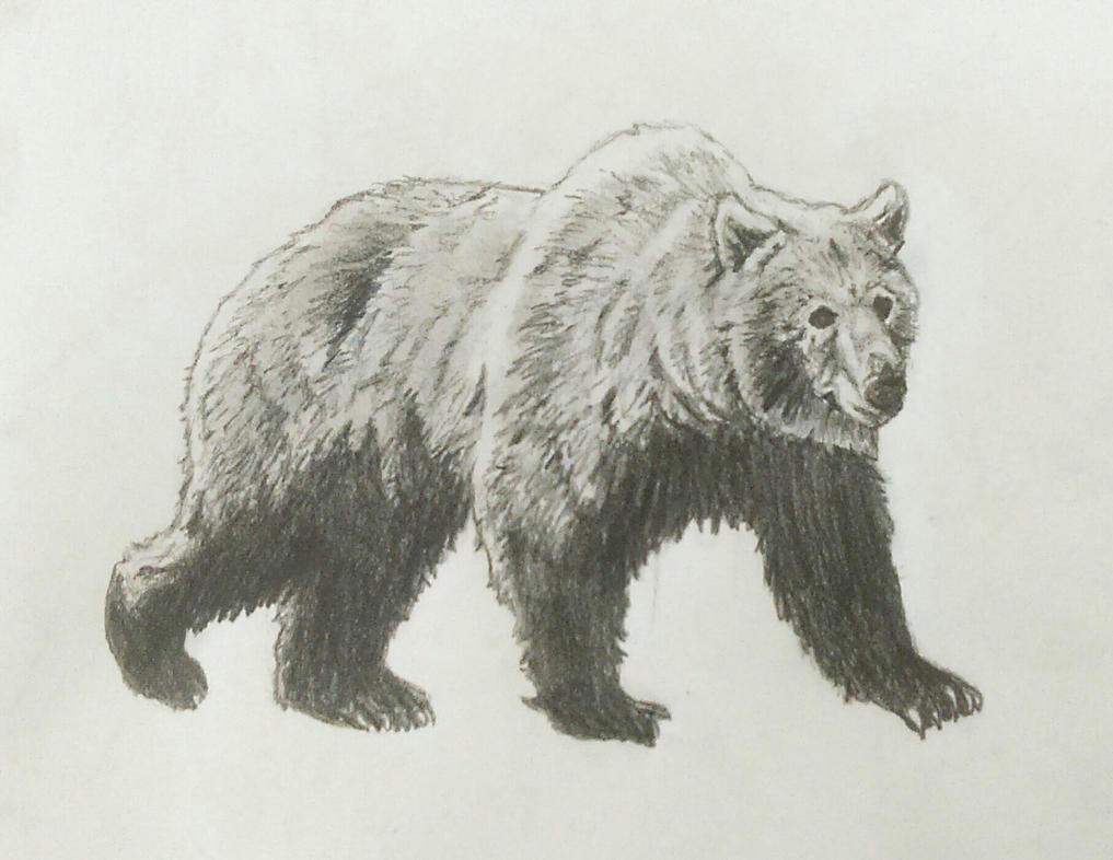 Giant Panda Bear  bearlifeorg