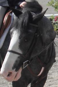 bluemoon15's Profile Picture