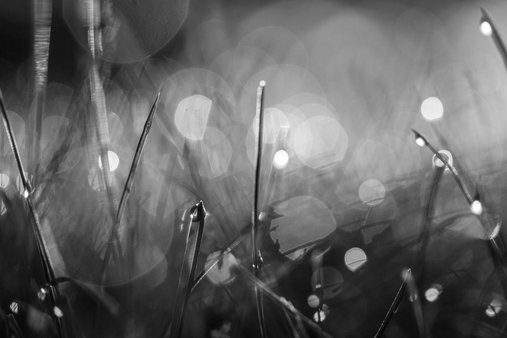Winter sunrise by bluemoon15