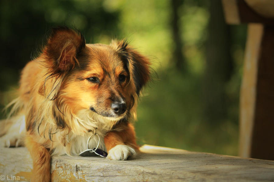 The dog by Lina-182