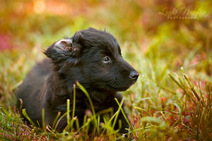 Little puppy by Lina-182