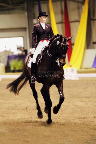 Elegant Mover by silhouette-equus