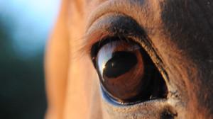 silhouette-equus's Profile Picture