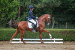 Dressage Stock 023 Canter