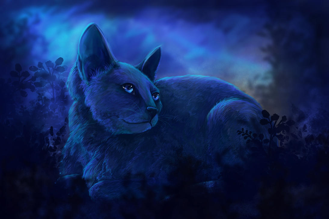Cat in the Night by TARSKYN