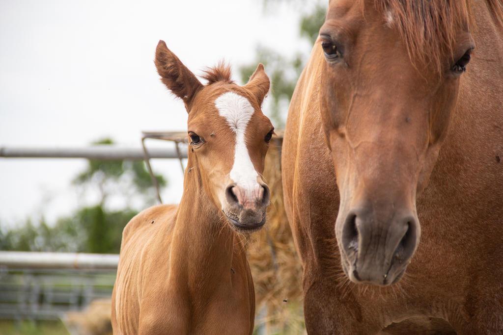 Foal Stock 001 by TARSKYN