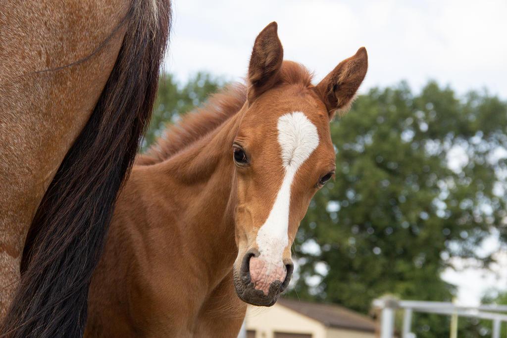 Foal Stock 002 by TARSKYN