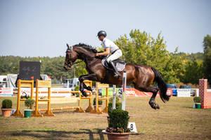 Horse Stock 066