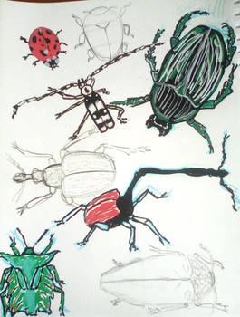 Page of interesting beetles!