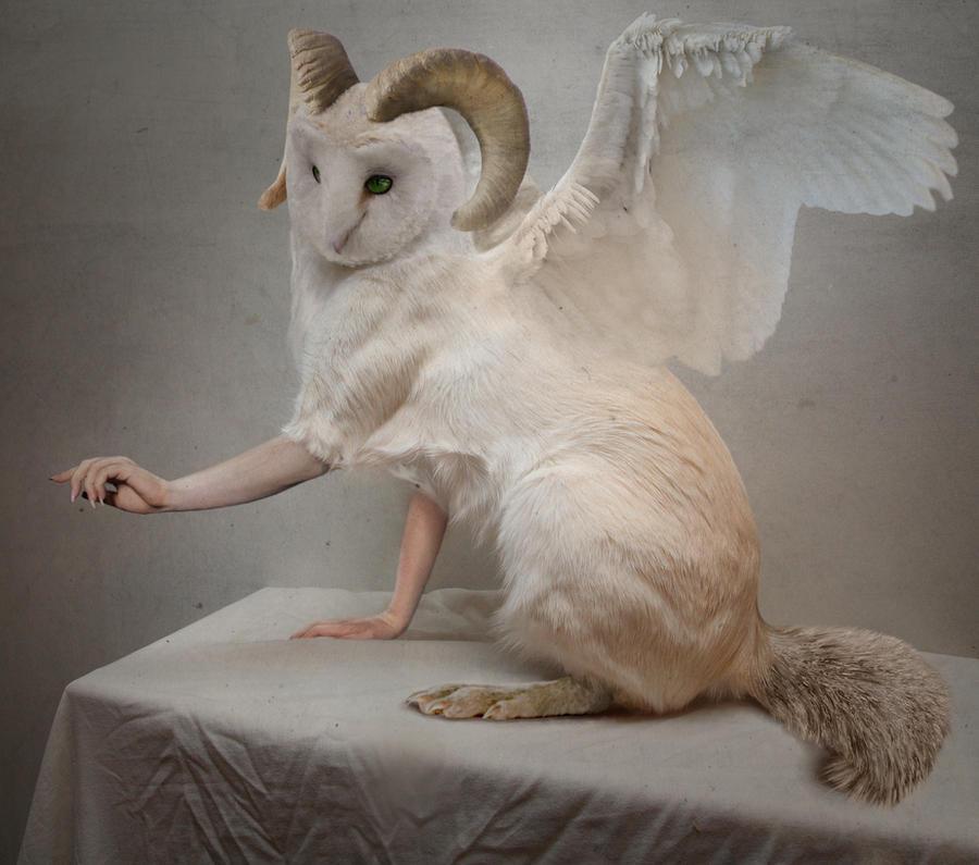 Owl-cat creature by k0niczyna