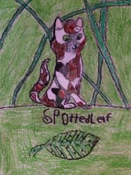 Spottedleaf by Ask-Spottedleaf-546