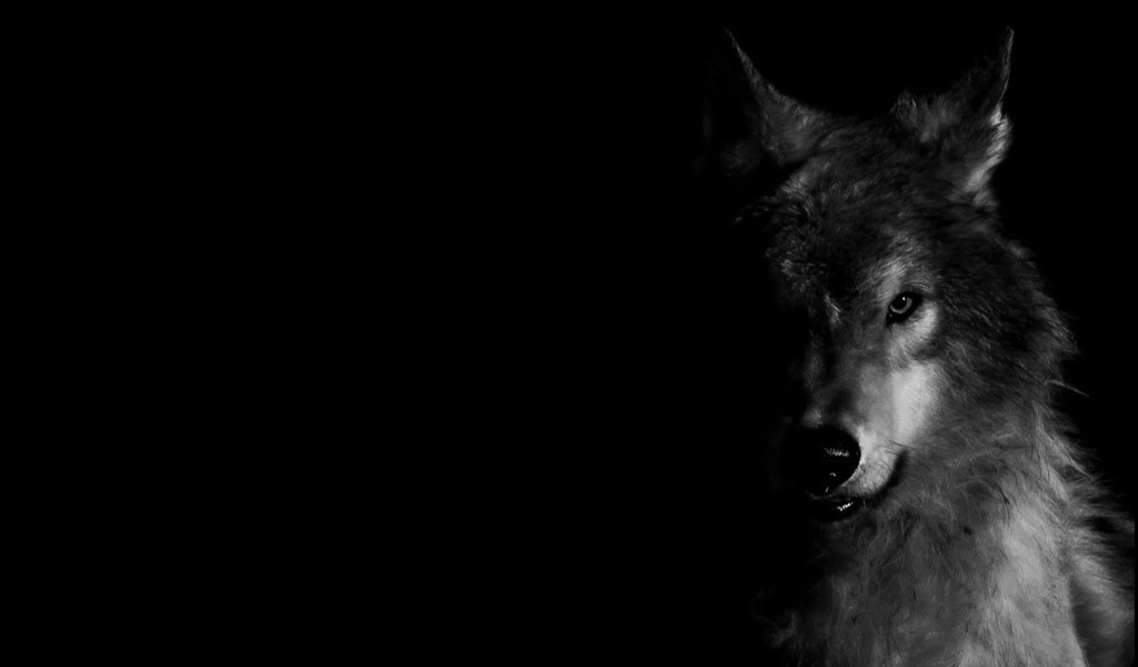 New Wolf Wallpaper Black and White