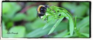 Bumblebee 1 by Avahlon