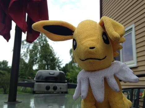 Jolteon's Ear is Now Floopy