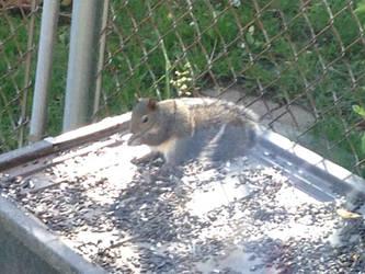 Baby Squirrel: Mischief