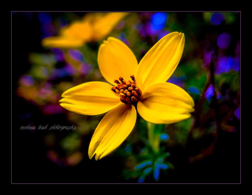 Soul Flower by melissaleahmp on DeviantArt