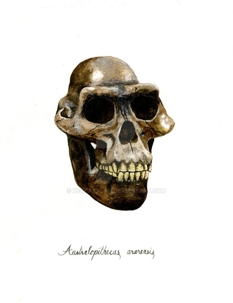 paranthropus boisei steckbrief