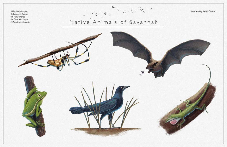 Native Animals of Savannah by Kevin-Studios