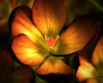 Fire-flower ii