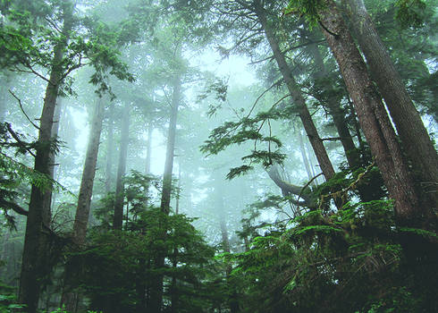 the everforest.2.